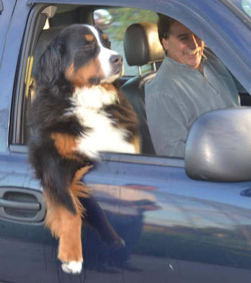 21123938_funny-dog-car-window-cool[1].jpg