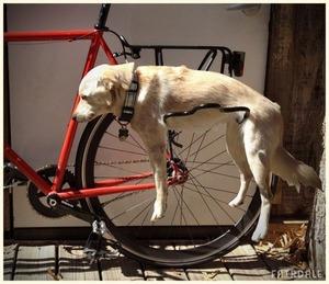 自転車 海外.jpg