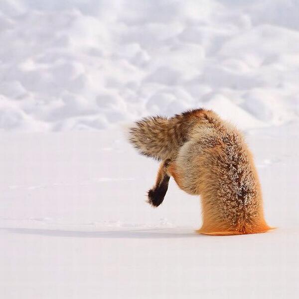 雪にダイブ1.jpg