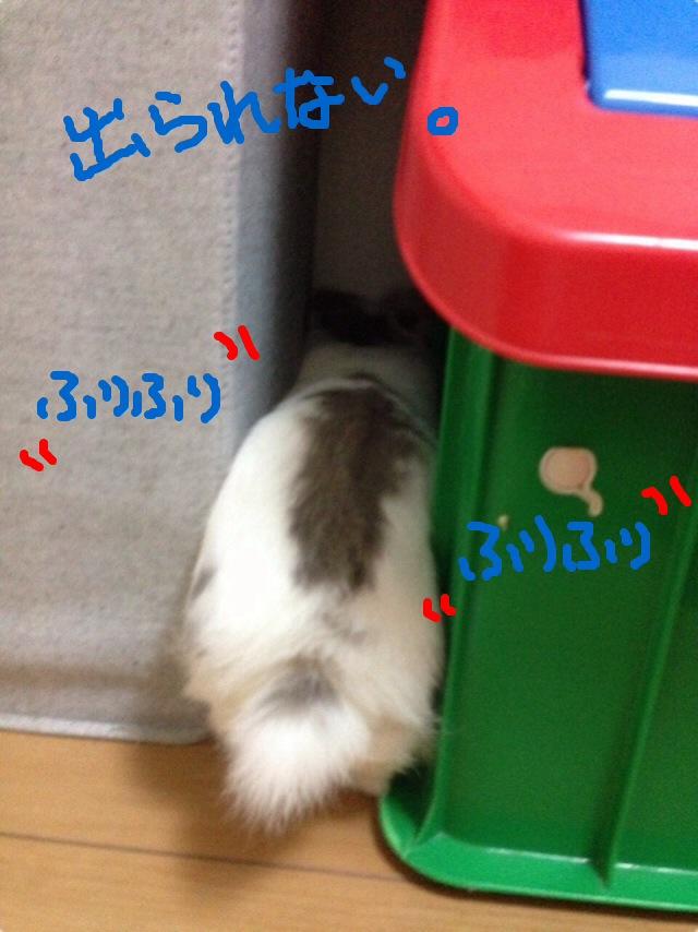 IMG_9587[1].jpg